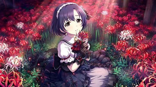 [手折られぬ花]白菊ほたる